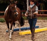 Equikinetic - das Muskelaufbauprogramm für ihr Pferd - Bad Zwischenahn