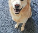 Baxter sucht eine Liebevolle Familie - Bremen