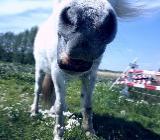 Voltigieren für Kinder - Ponyhof Borstel - Borstel
