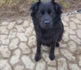 Blacky der Familienhund - Zeven
