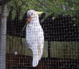 Kakadu,Rocko sucht neue Familie - Wagenfeld