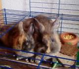 Kaninchen Kinder brauchen ein neues Zuhause - Nordenham