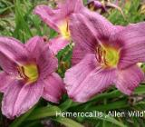 Pflanzen - kostenlos abzugeben - nur Abholung 26169 Friesoythe - Friesoythe