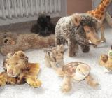 Steiff Tiere (Raritäten) - Dörverden