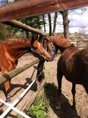 Stall, insbesondere für verletzte Pferde, Senioren, Rehe in Bremen Osterholz - Bremen