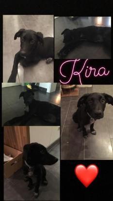 Kira sucht ihr für immer Zuhuase. - Cuxhaven