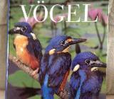Enzyklopädie der Vögel - Osterholz-Scharmbeck