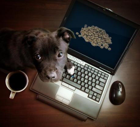 Warum seinen Hund nicht mit Reico Vital ernähren!? - Visselhövede