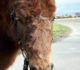 Gutscheine vom Ponyhof - Borstel