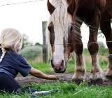 Tageskind auf dem Ponyhof - Borstel