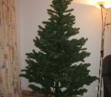 Weihnachtsbaum/ Tannenbaum - Bremen Findorff