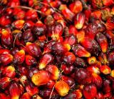 Palmöl für die Herstellung von Biodiesel, die Seifenherstellung und den persönlichen Gebrauch - Delmenhorst Hasport