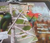 AZ Vogelinfo ( AZ Nachrichten) - Osterholz-Scharmbeck