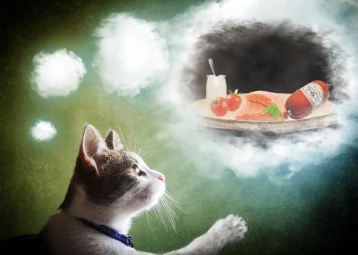 Einladung Ihrer Katze zum Test-, Festessen - Visselhövede
