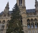 Weihnachtsbäume (Nordmanntannen) zu verkaufen - Bremen