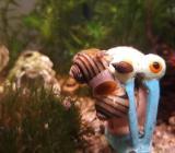 Schnecken fürs Aquarium abzugeben - Blender