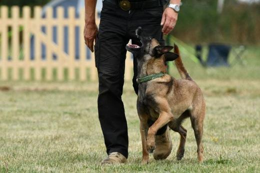 Hunde-Training bei DVG MV Teampartner-Hund-Hoya e.V in Hoya - Dörverden
