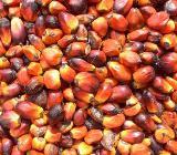 Rohöl und raffiniertes Palmöl - Martfeld