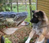 Urlaub mit Hund. Ferienhaus in Süd-Schweden, Boot, Sauna, Angelrecht - Bremerhaven