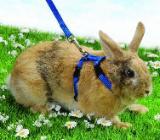 """Trixie Geschirr für Kaninchen mit 2 Leinen """" NEU """" - Verden (Aller)"""