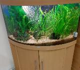 Juwel-Aquarium mit E-Heim Filter - Bremen