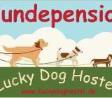 Sie suchen eine familiäre Hundepension für ihren Vierbeiner ? - Hagen im Bremischen