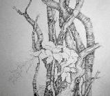 Märchenbaum - Graphit auf Papier 30 x 40 cm Original Ingrid Wolff-Bleekmann - Münster