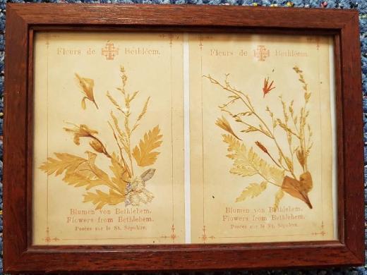 Fleurs de Bethléem - (gepresste) Blumen aus dem Heiligen Land