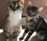 Kleine Katzenfamilie abzugeben - Recke