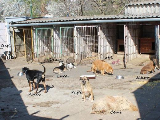 Vermittlungshilfe für Hunde in Not